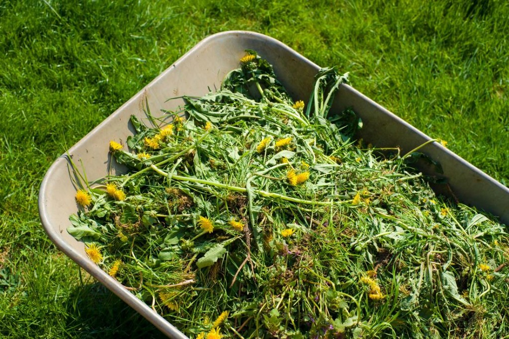glendale-lawn-pros-weed-removal-and-control-1_orig