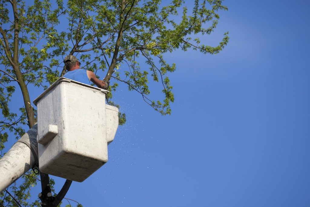 local-tree-trimming-companies